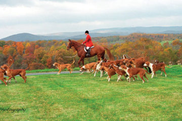 Reggie Spreadborough the huntsman for Orange County Hounds at Flinthill.