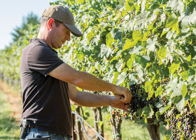 Sébastien Marquet of Greenhill Winery & Vineyards