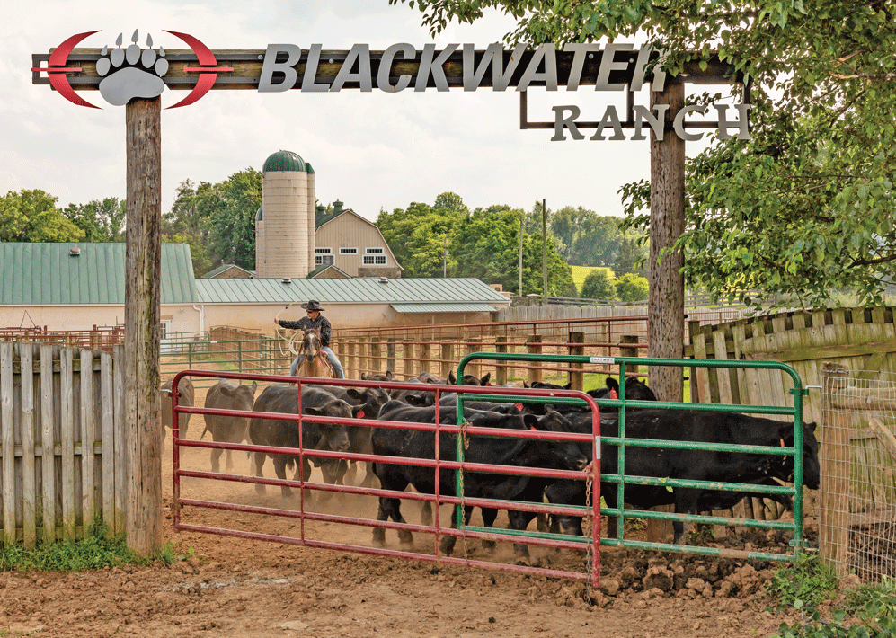 Blackwater Ranch raises Black Angus sold through its innovative subscription program and a growing retail market. Photo by Tony Gibson