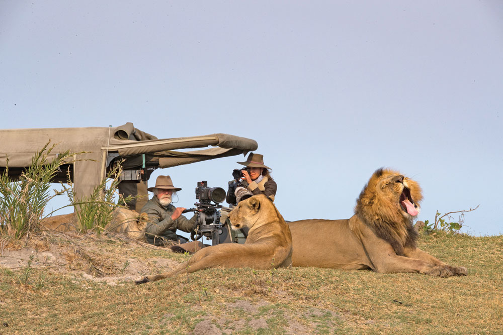 Dereck and Beverly Joubert film a favorite pride of lions in the Okavango Delta. Lions are listed as Vulnerable by the IUCN Red List.