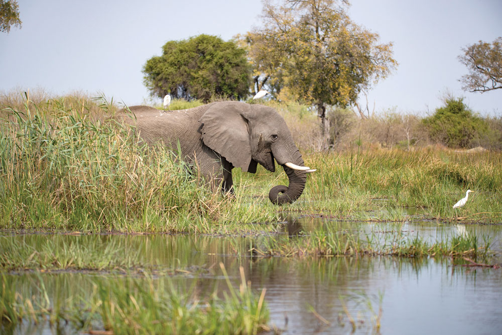 Botswana is home to an estimated 130,000 elephants, at least 1/3 of the world's population.