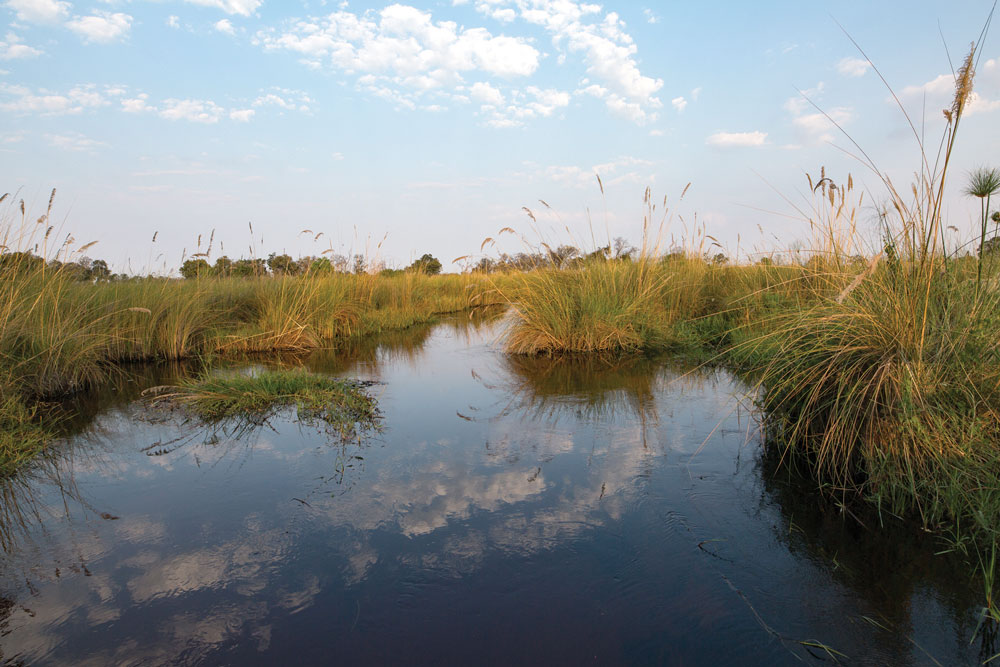 The Okavango Delta is a vast, pristine freshwater ecosystem large enough to be visible from space. It was listed as a UNESCO World Heritage Site in 2014.
