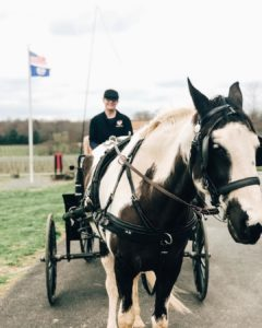 Carriage Rides with Doc & Molly @ Greenhill Winery & Vineyards